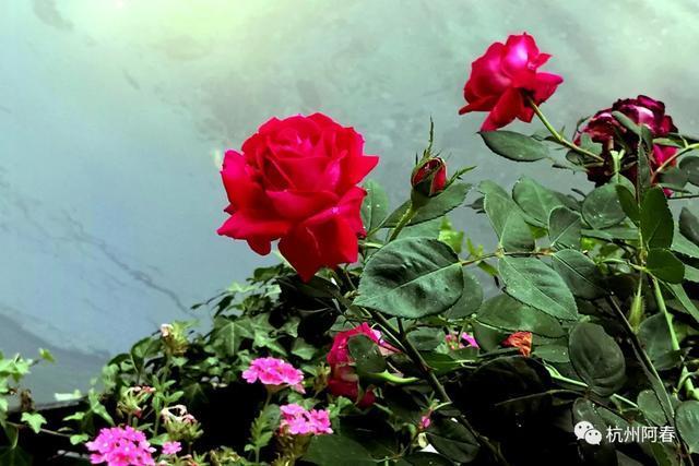 手机拍照11| 最美的花 献给最美的您:白衣战士