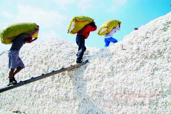 储备棉轮出的风声越发紧 棉花市场静候消息