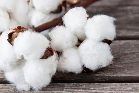 南疆手摘棉询价增多 棉企销售大幅提速