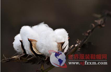 当前内地籽棉收购价格为何下行?