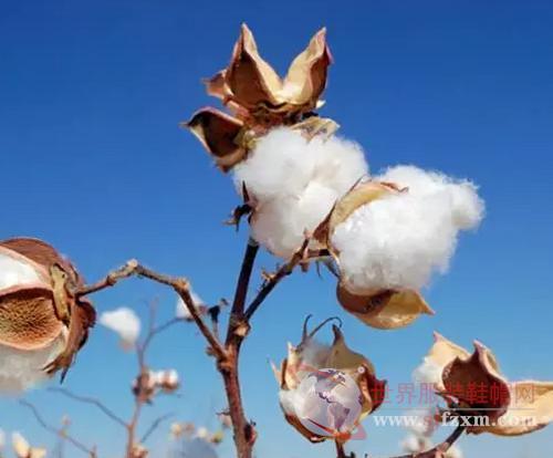 """过去一年国内棉花市场经历了""""V""""型走势"""
