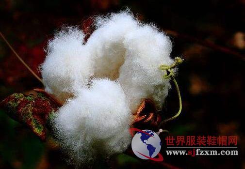 棉花政策:轮出延期传言给市场的影响并非都是利空