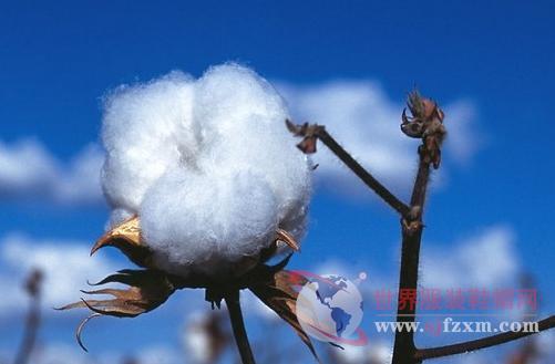 三伏天暑热难耐 轮入传闻对棉花市场将造成什么影响?