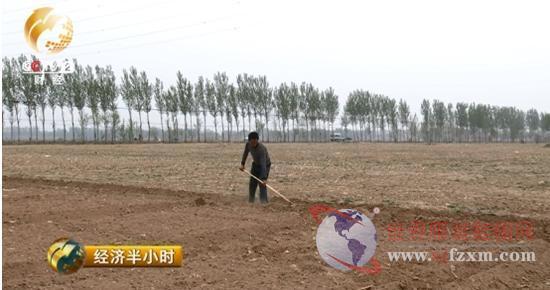 """棉农种棉收入低费人工,这个春天棉花""""暖不起来"""""""