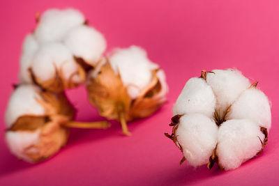 需求开始启动 棉价能否复苏?